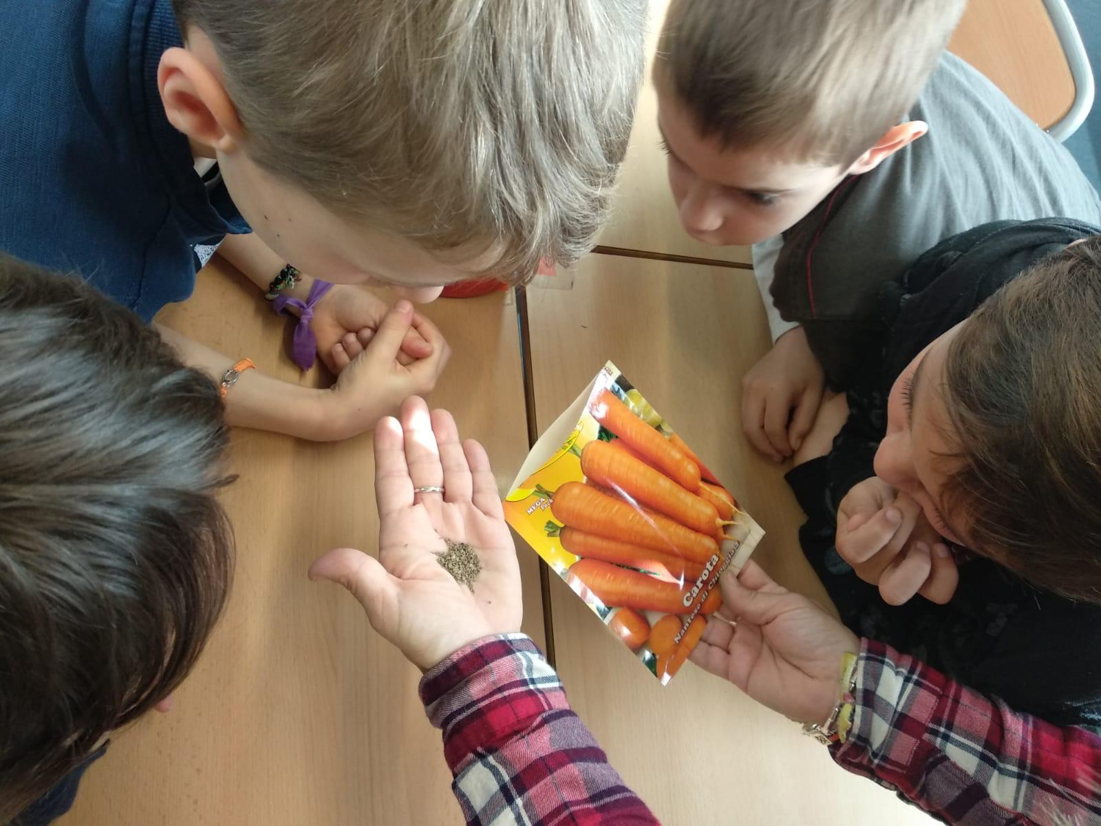 Que passarà si plantem pastanagues i raves?